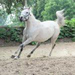 amrya-el-araf_003