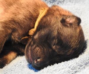 L-n1-w1-pup.geel-03