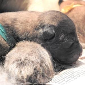 Pups-Lamira-dag1-02