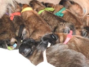 Pups-Lamira-dag1-07