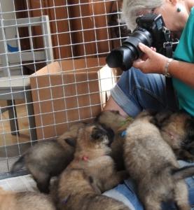 Pupsmfotogr-01